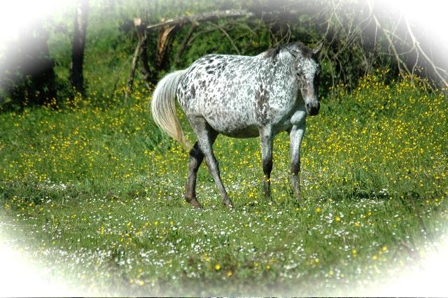 Ecrire des textes qui fon parler mes chevaux! Opium_16
