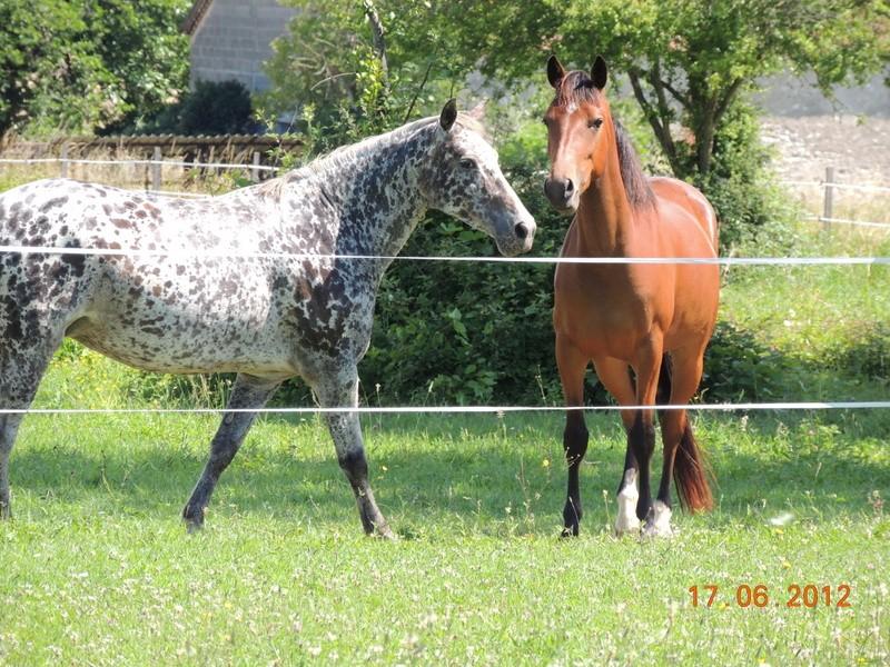 Mes chevaux, un mélange d'un peu tout le monde! Opium_67