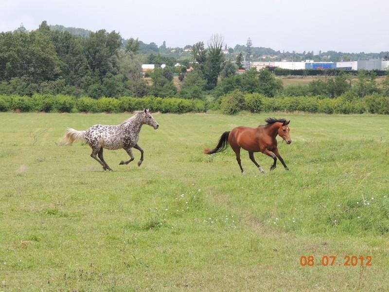 Mes chevaux, un mélange d'un peu tout le monde! Opium_68