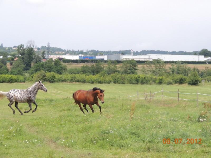 Mes chevaux, un mélange d'un peu tout le monde! Opium_69