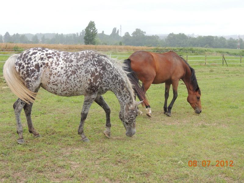 Mes chevaux, un mélange d'un peu tout le monde! Opium_70
