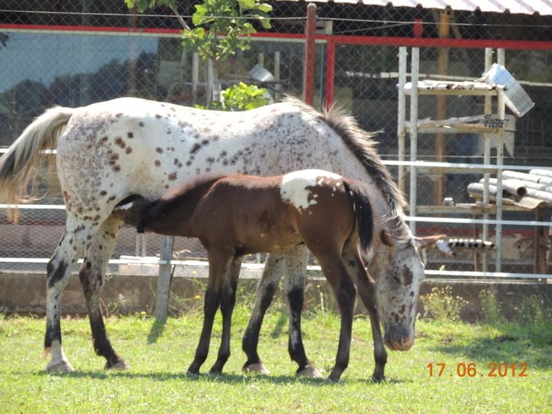 Mes chevaux, un mélange d'un peu tout le monde! Quarin53