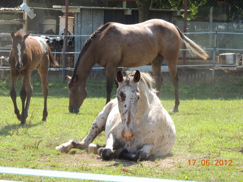 Mes chevaux, un mélange d'un peu tout le monde! Quarin54