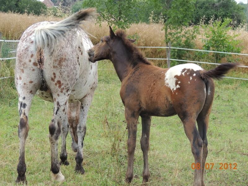Mes chevaux, un mélange d'un peu tout le monde! Quarin58