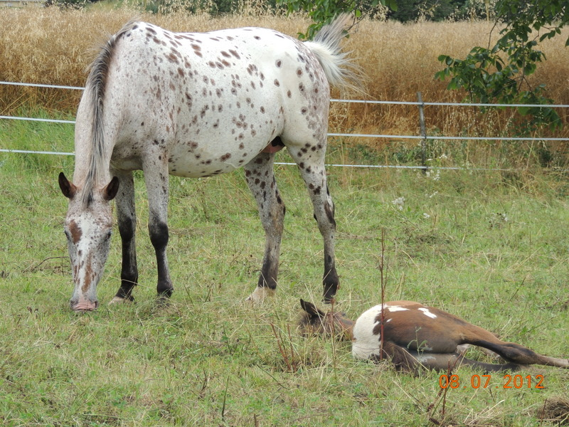 Mes chevaux, un mélange d'un peu tout le monde! Quarin59