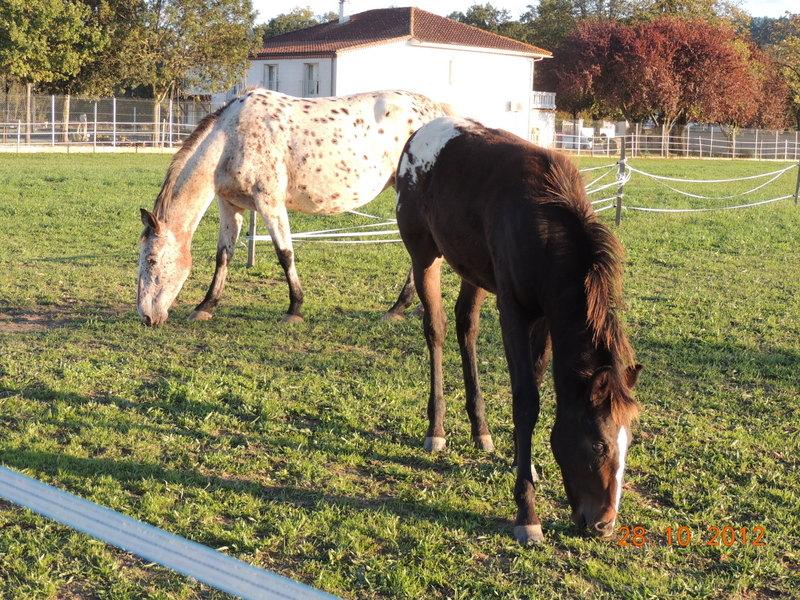 Mes chevaux, un mélange d'un peu tout le monde! - Page 2 Quarin68