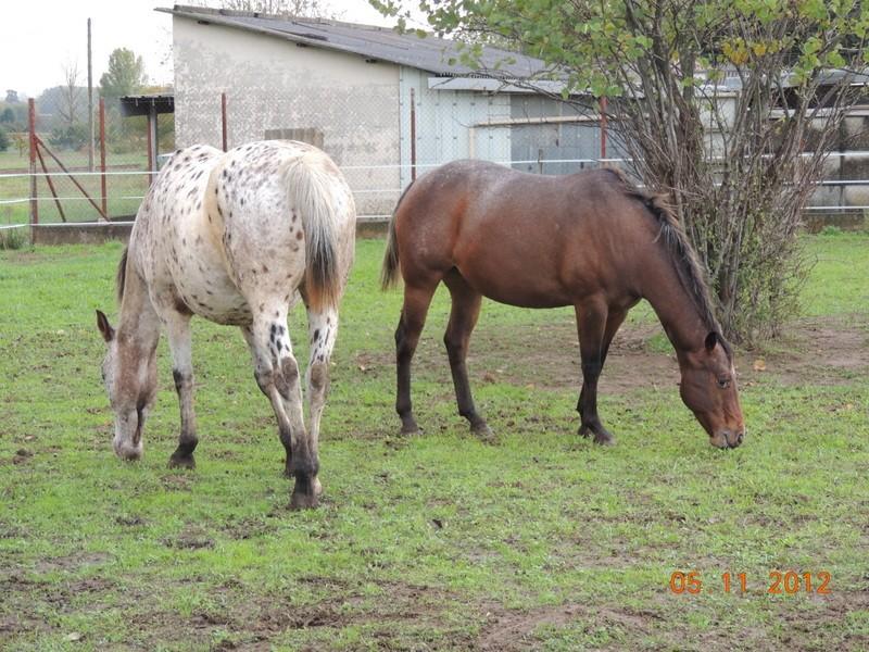 Mes chevaux, un mélange d'un peu tout le monde! - Page 2 Quarin69