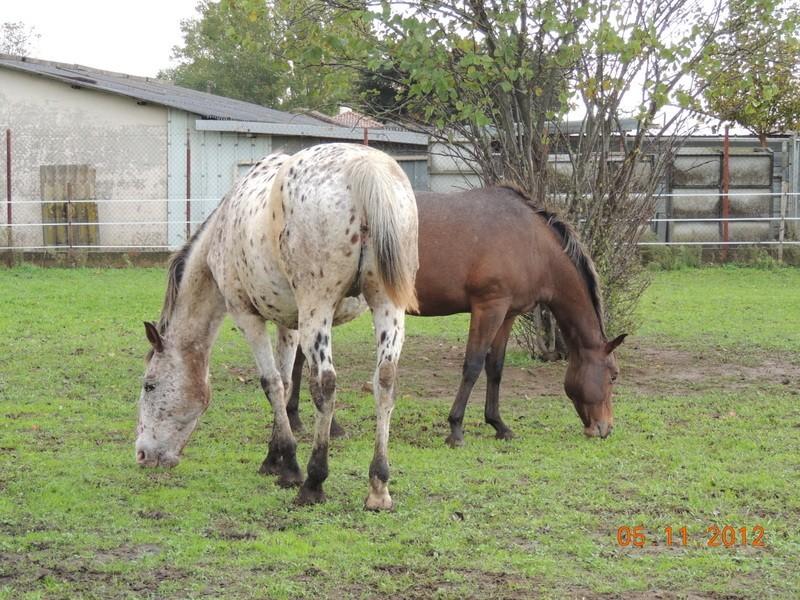 Mes chevaux, un mélange d'un peu tout le monde! - Page 2 Quarin70