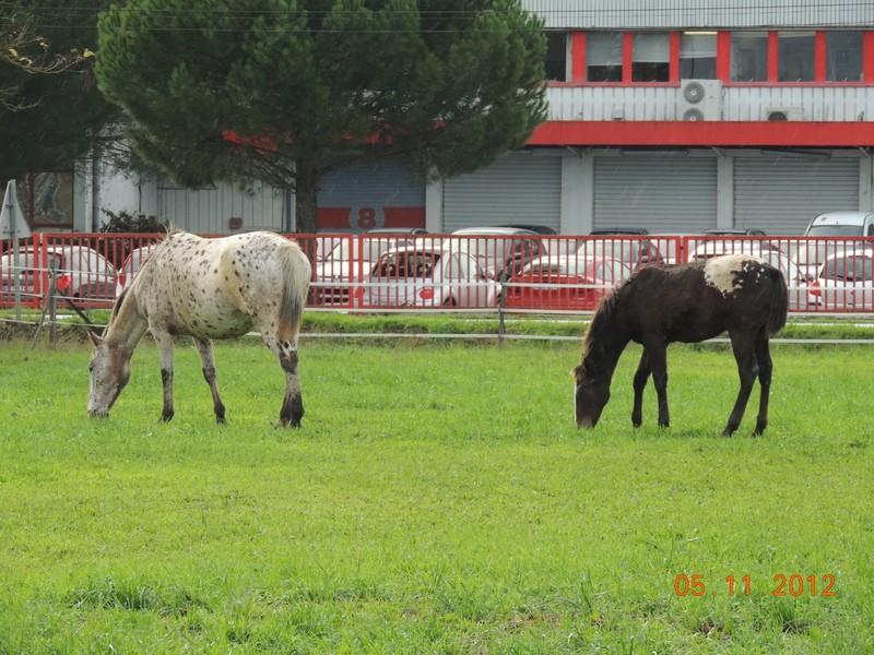 Mes chevaux, un mélange d'un peu tout le monde! - Page 2 Quarin71