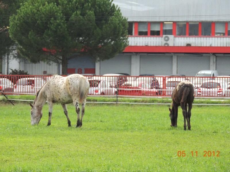 Mes chevaux, un mélange d'un peu tout le monde! - Page 2 Quarin72
