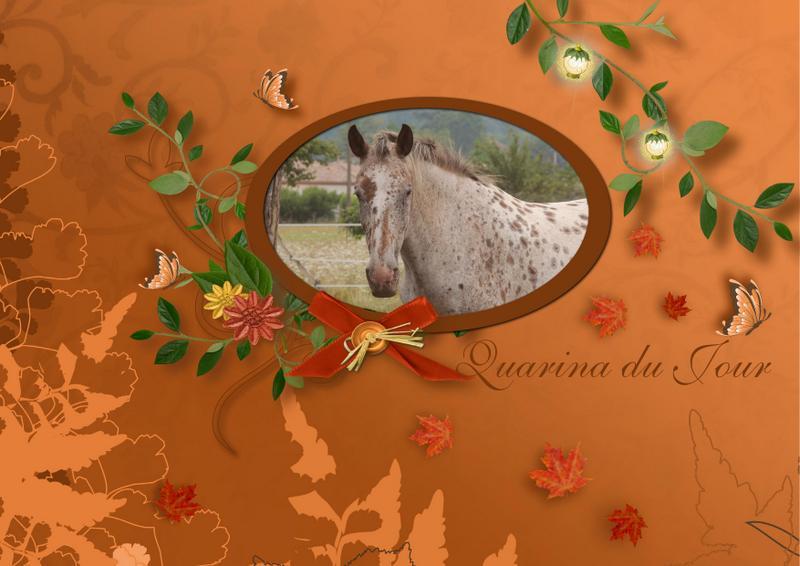 Mes petits montages photo!! - Page 2 Quarin79