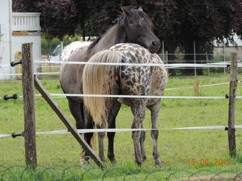 Mes chevaux, un mélange d'un peu tout le monde! Undy_e14