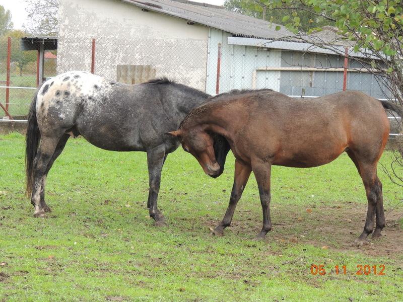 Mes chevaux, un mélange d'un peu tout le monde! - Page 2 Undy_e15