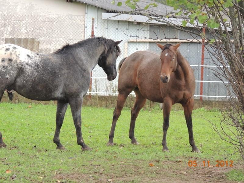 Mes chevaux, un mélange d'un peu tout le monde! - Page 2 Undy_e16