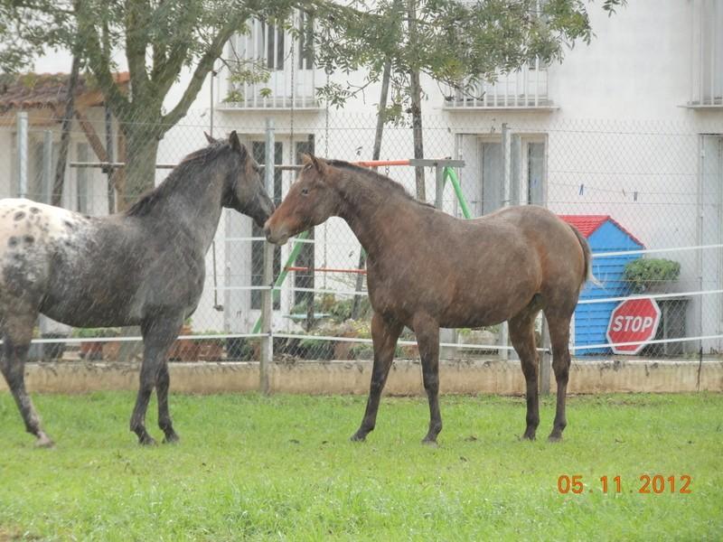 Mes chevaux, un mélange d'un peu tout le monde! - Page 2 Undy_e17