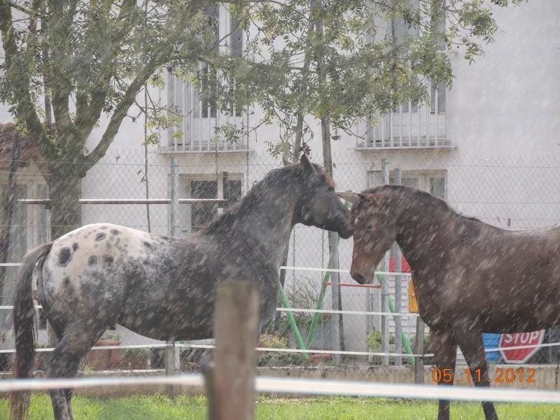 Mes chevaux, un mélange d'un peu tout le monde! - Page 2 Undy_e18