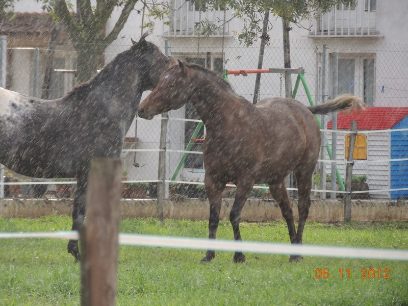 Mes chevaux, un mélange d'un peu tout le monde! - Page 2 Undy_e19