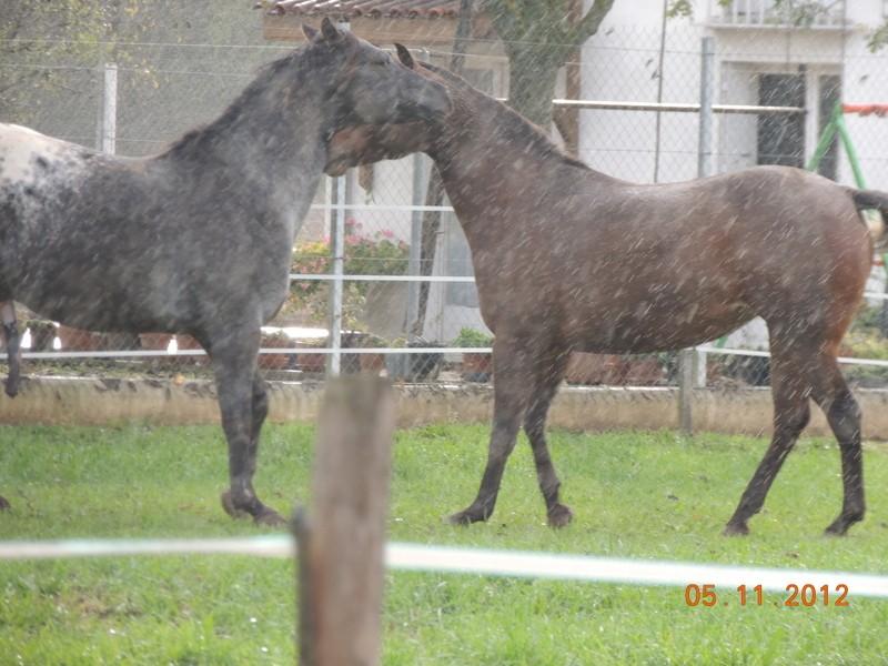 Mes chevaux, un mélange d'un peu tout le monde! - Page 2 Undy_e20