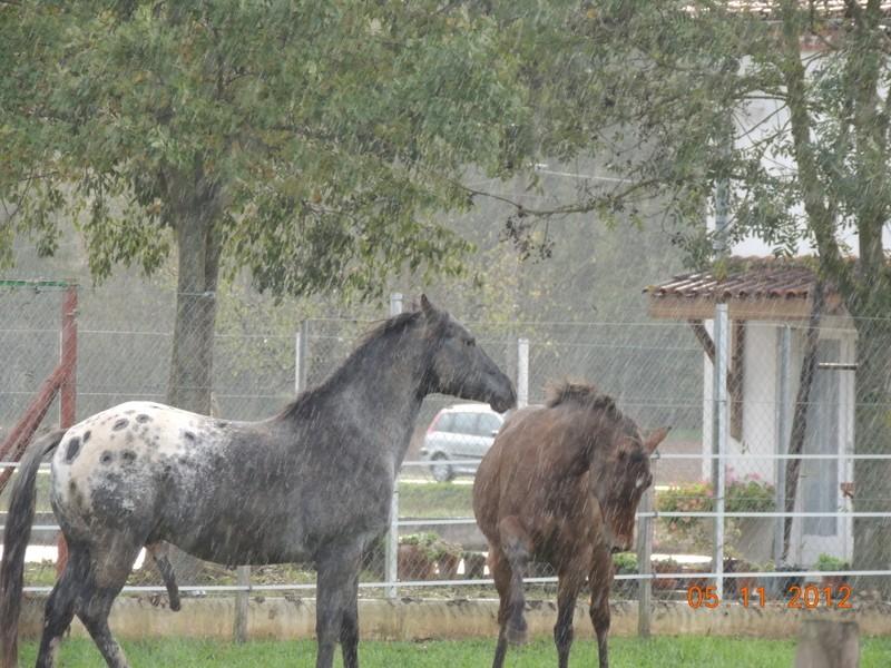Mes chevaux, un mélange d'un peu tout le monde! - Page 2 Undy_e21