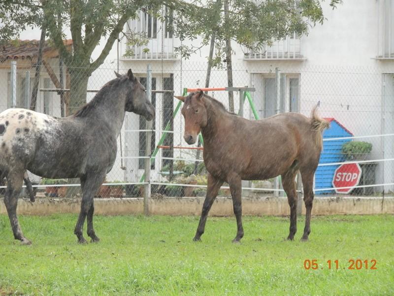 Mes chevaux, un mélange d'un peu tout le monde! - Page 2 Undy_e22