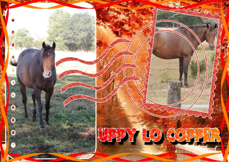 Mes petits montages photo!! Uppy13
