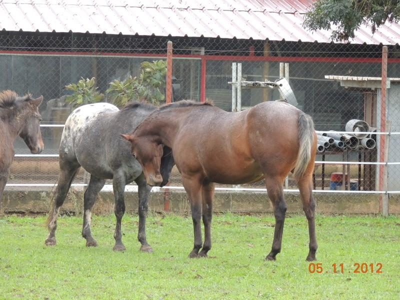 Mes chevaux, un mélange d'un peu tout le monde! - Page 2 Uppy_e11