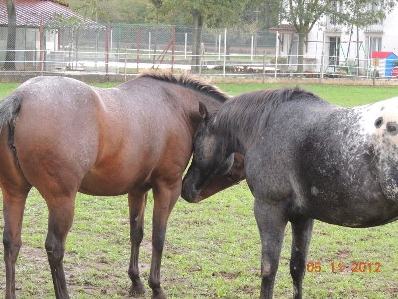 Mes chevaux, un mélange d'un peu tout le monde! - Page 2 Uppy_e12