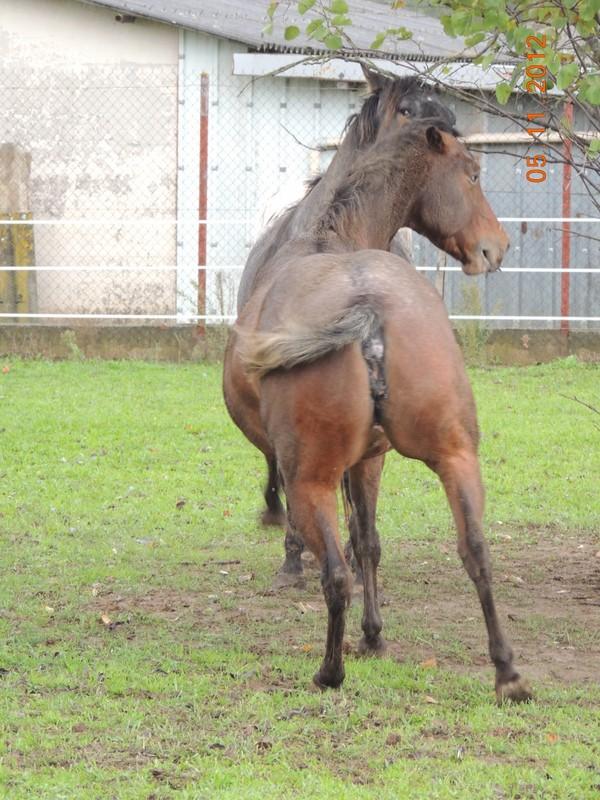 Mes chevaux, un mélange d'un peu tout le monde! - Page 2 Uppy_e14