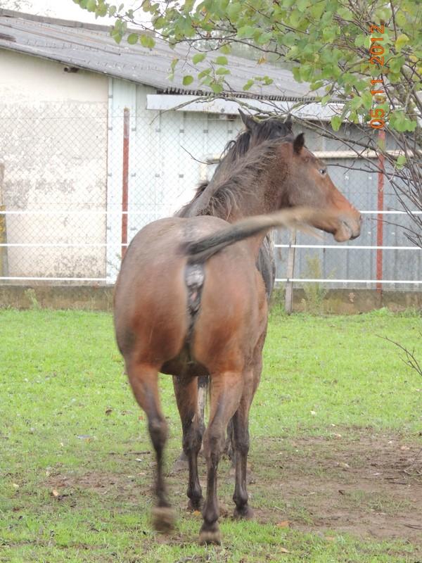 Mes chevaux, un mélange d'un peu tout le monde! - Page 2 Uppy_e15