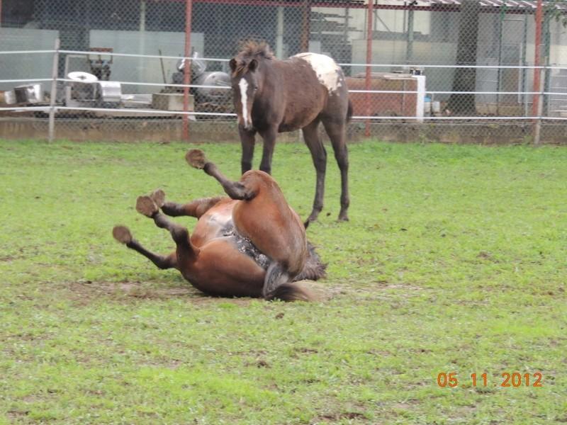 Mes chevaux, un mélange d'un peu tout le monde! - Page 2 Uppy_e16
