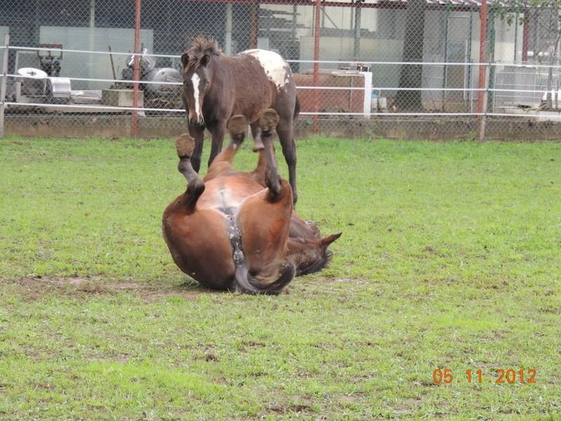 Mes chevaux, un mélange d'un peu tout le monde! - Page 2 Uppy_e17