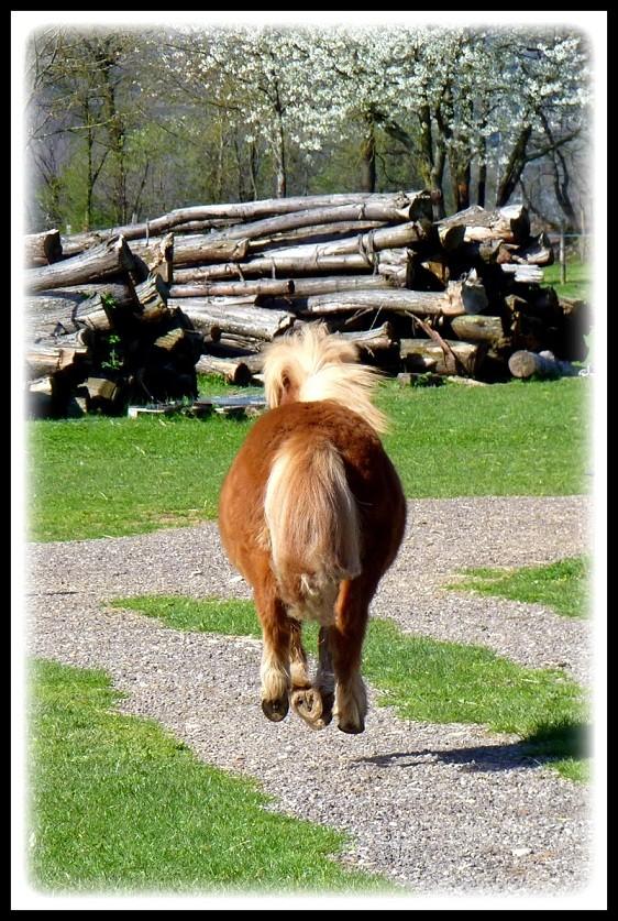 "Concours : ""cheval au galop"" GAGNANTE : TItâne - Page 2 P1070311"