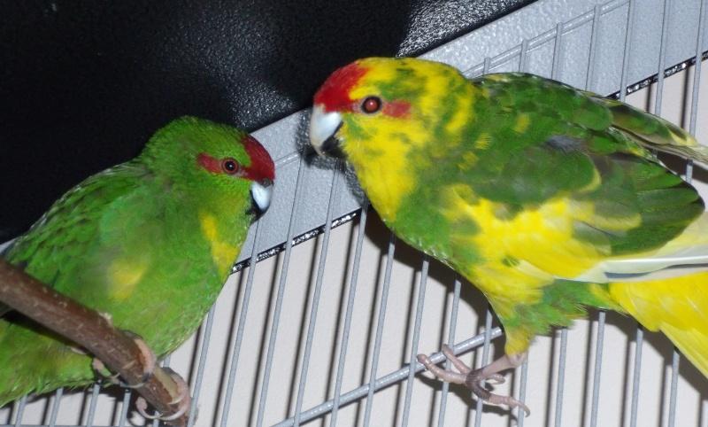Lila et Riki sont parents! Dscf4010