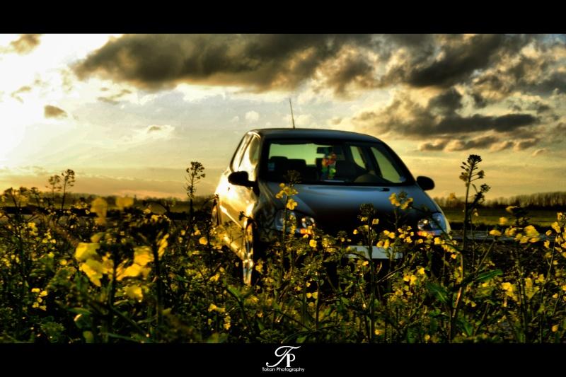 """Concours photo Decembre, thème """"la nature sous toutes ses formes'' Dsc_0010"""