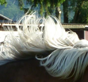 thème mai 2012: un bout de cheval !  - Page 3 Copie_10