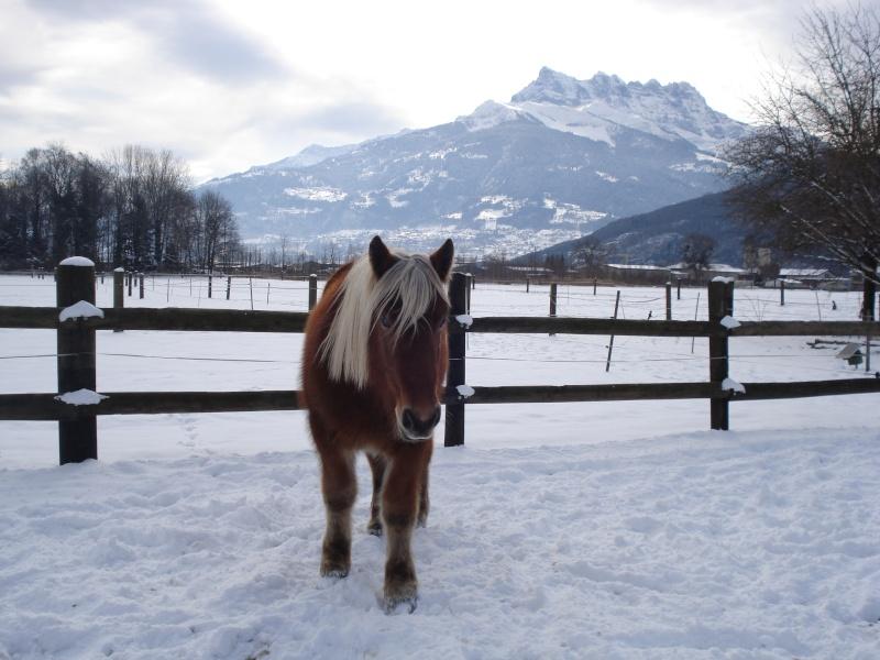 Concours Photos Décembre : Le Cheval et la Neige Dsc02410