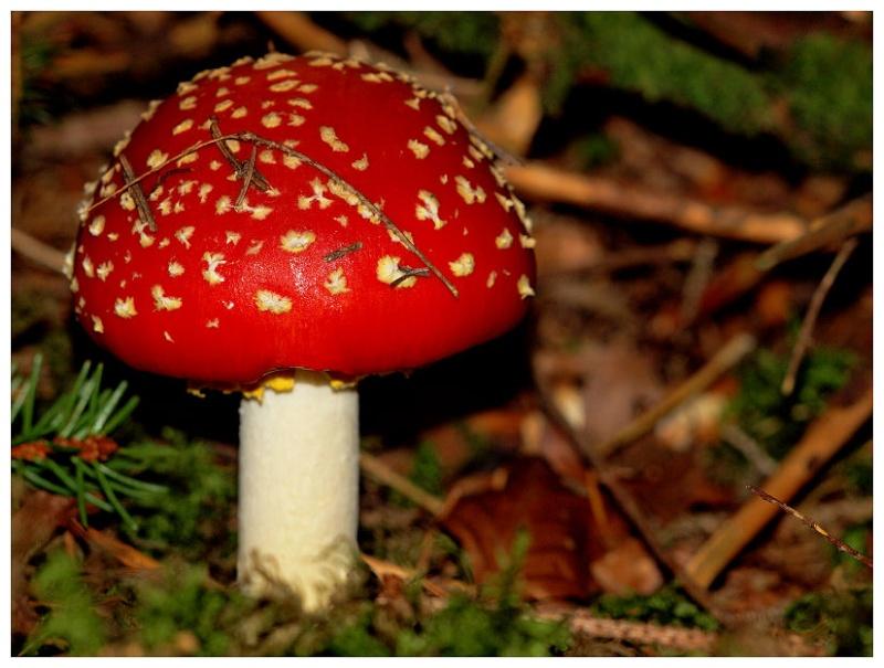 Derniers champignons Champi17