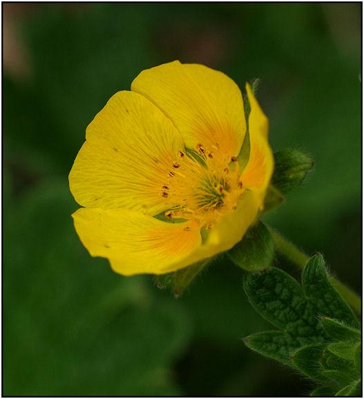 Balade florale du matin Fleurj11