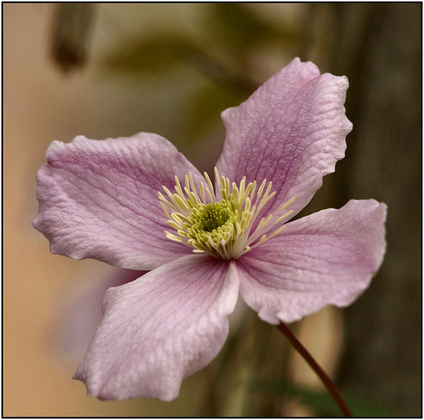 Quelques fleurs identifiées  Fleurr12