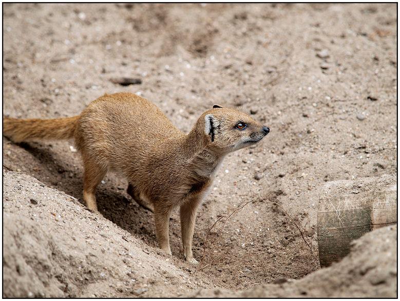 Parc zoologique de Cerza Mangou10