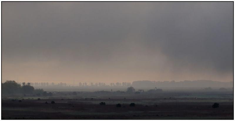 Marais dans la brume Marais11