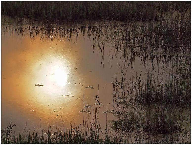 Marais dans la brume Marais12