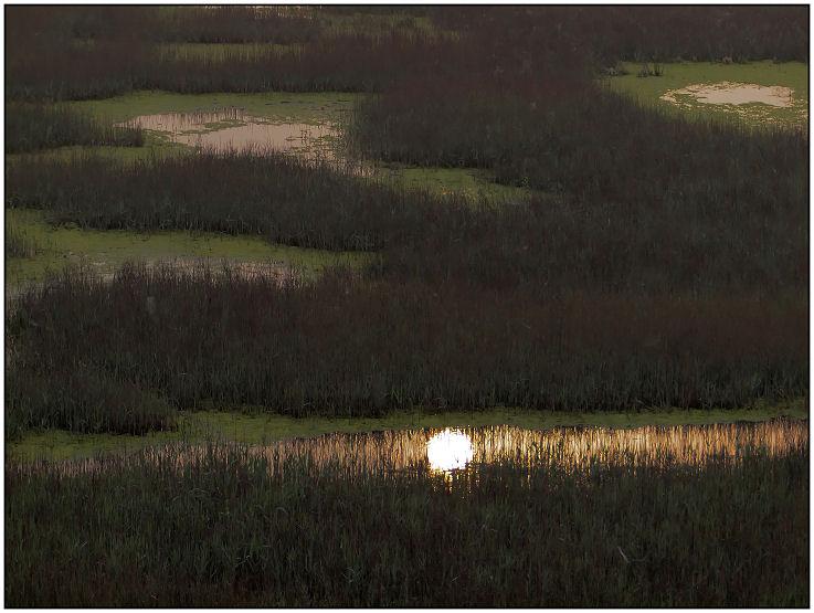 Marais dans la brume Marais13
