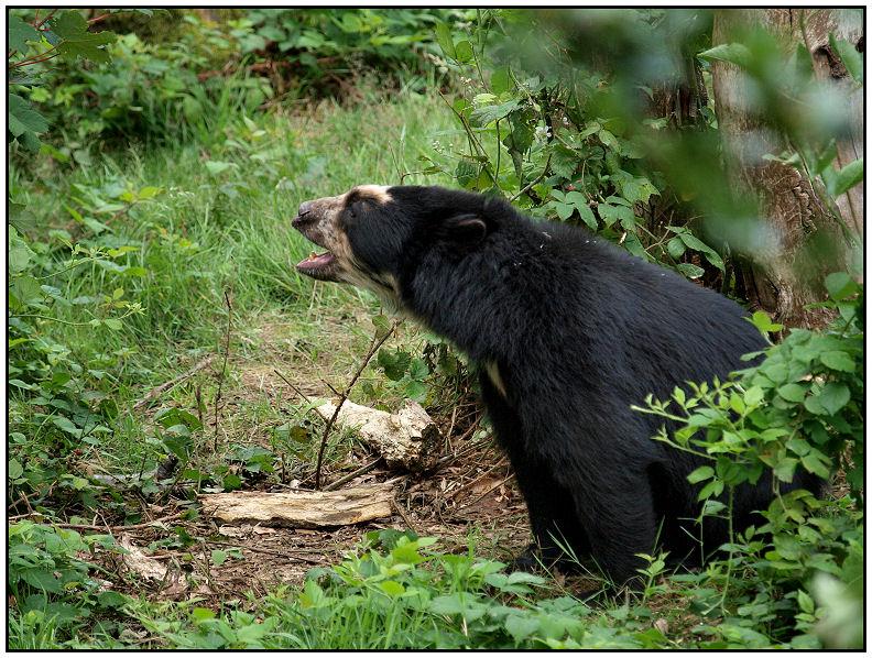 Parc zoologique de Cerza Ourslu10