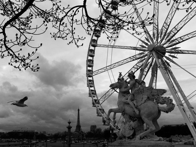 Promenage au jardin des Tuileries P2180510