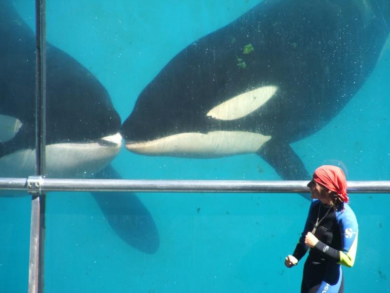 [Photos] Orques aux vitres 2610