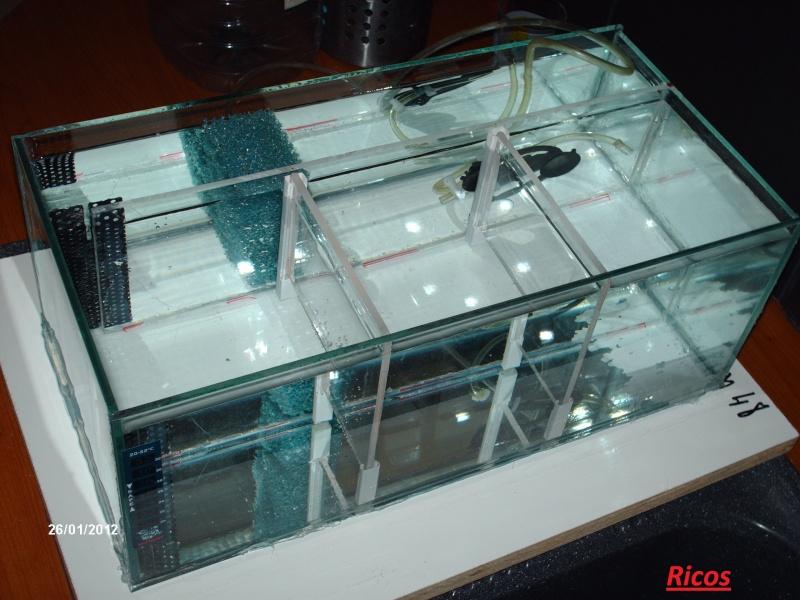 construction bac béta splendens  7_beta10