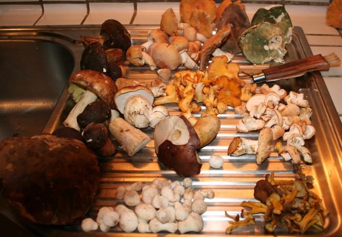 Ma cueillette de champignons Champi10