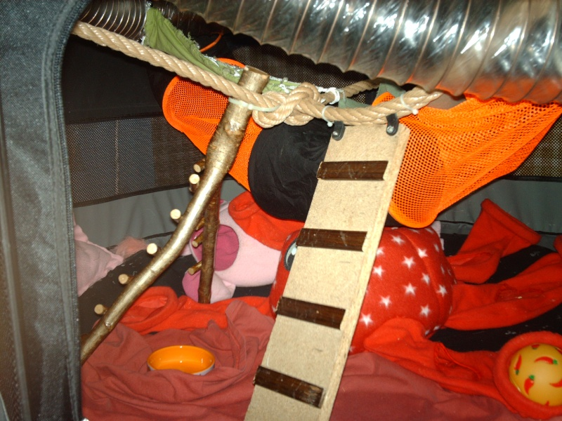 Enclos en nylon reconverti en aire de jeu ( photos ) - Page 5 Imag0913