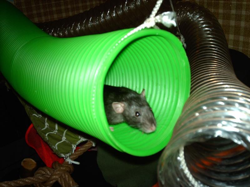 Enclos en nylon reconverti en aire de jeu ( photos ) - Page 5 Imag1011